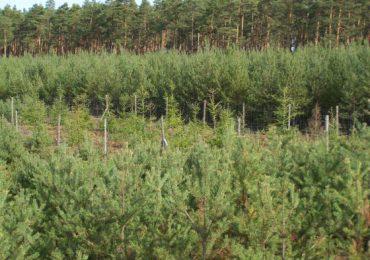Rolnictwo: Posadzenie lasu możliwe ze wsparciem ARiMR.