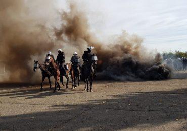 Rzeszów: Egzamin sprawdzający kwalifikacje koni policyjnych