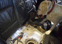 Lubaczów: Policyjny pies pomógł wykryć kontrabandę w samochodzie.