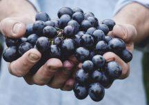Rolnictwo: Wyroby winiarskie – rząd przyjął projekt ustawy