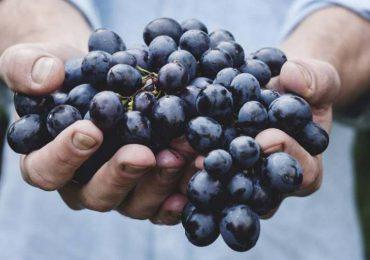 Rolnictwo: Wyroby winiarskie - rząd przyjął projekt ustawy
