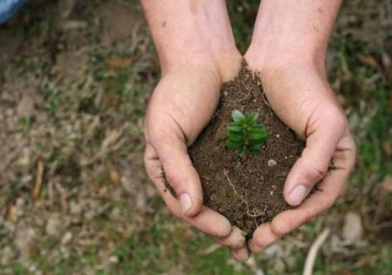 Mielec: Zmieńmy śmieci w drzewa