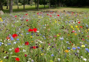 Mielec: Przy ulicy Jagiellończyka powstanie łąka kwietna